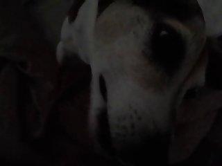 Dog Loves To Lick Bbw Boobs