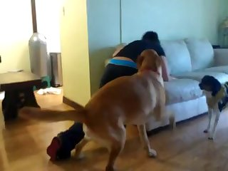 Sexy Asian Humped By Horny Dog