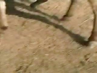 Amateur horse porn Arab Couple